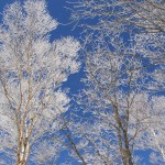 山頂の雪の華