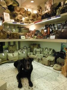 店のマスコット犬