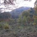 ドングリの木が植えられていました