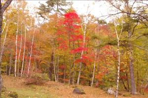 こんな綺麗な紅葉の中でキノコ狩り