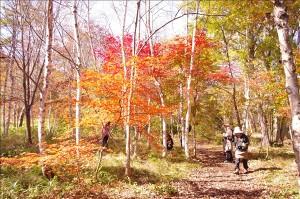 アファンの森の紅葉