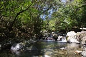 伊豆の渓流