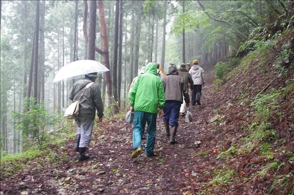 森をキノコを探して歩く
