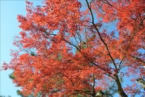 上野城への途中の紅葉