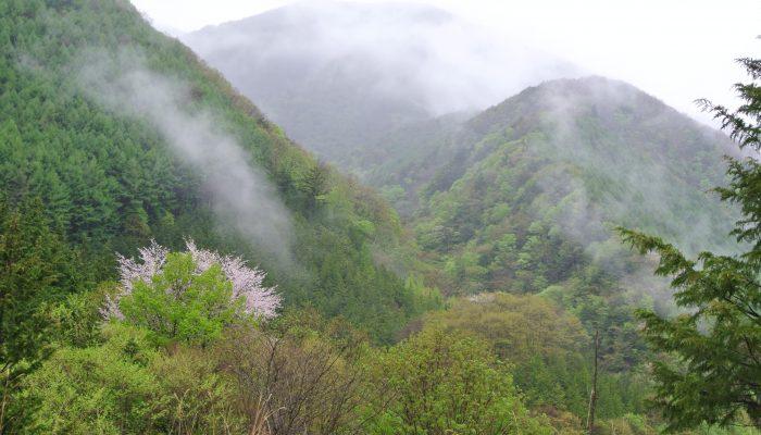 新緑の大鹿村