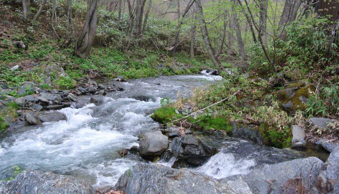 自然食材の宝庫・安家川